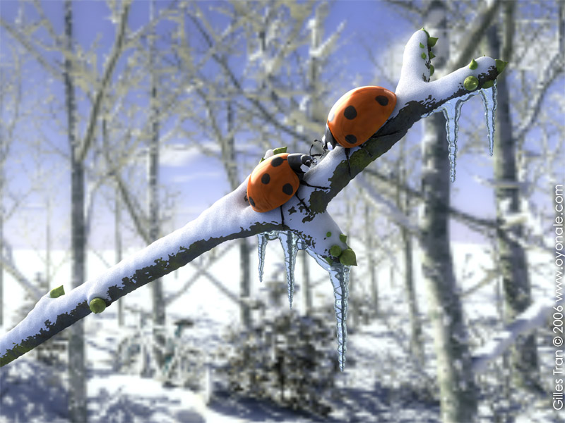 Christmas ladybirds