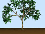 Tree generator (POV-Ray)