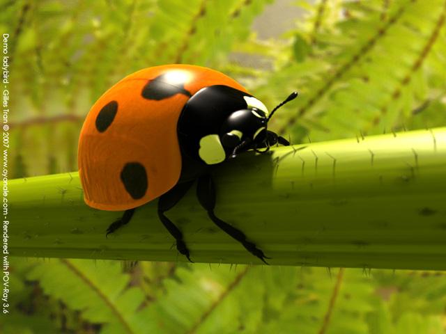 Ladybird (POV-Ray,C4D,OBJ)